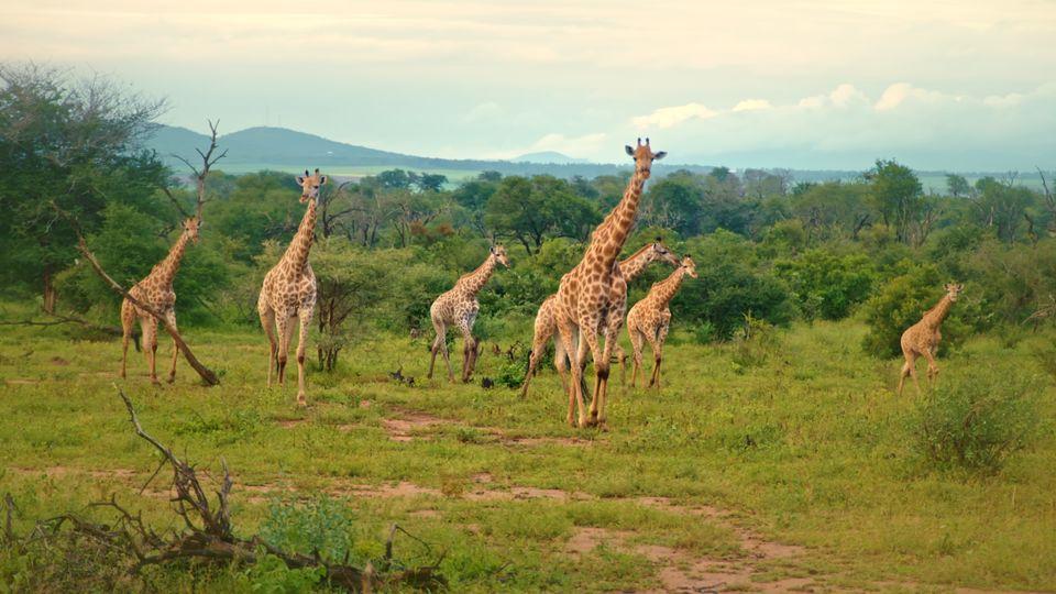 2019_das Auge Afrikas_6.472.1_HDklein
