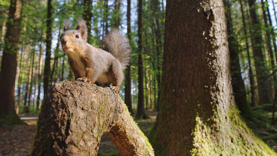 Hörnchen__1.2.1_klein