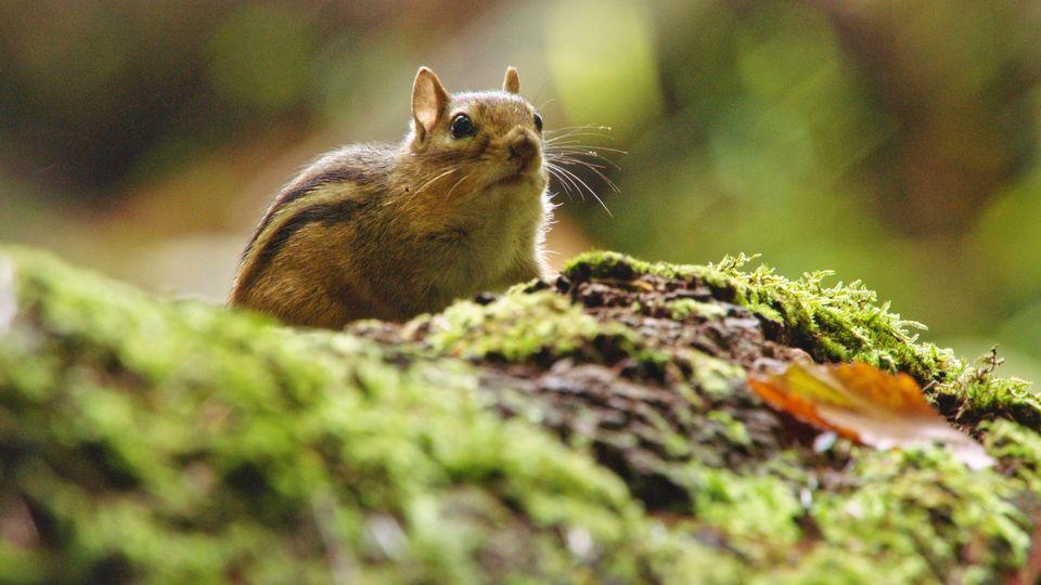 Hörnchen__1.4.1_klein